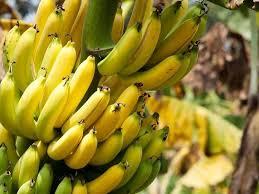 The History of '<b>Banana Republic</b>' | Merriam-Webster