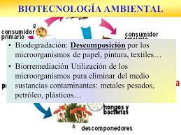 Resultado de imagen de los microorganismos en la industria
