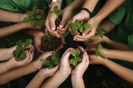 Image result for PLANTS IN HAND
