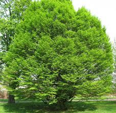 Quel arbre seriez-vous et pourquoi? Images?q=tbn:ANd9GcQZSbsoTdIGTmrJgRkKUvs1mZKLUemFkBVqzPY4nNOGBr_4o78-6Q