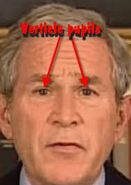 Image result for reptilian eyes bush hillary
