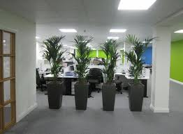 kentia palm plant screening in derby de1 offices more plant display ideas at www amazing office plants