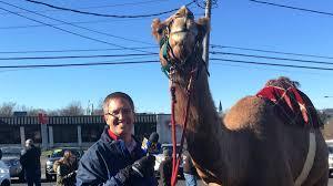 'Pennsylvania <b>Snow Camel</b>' Makes Public Appearance | WNEP.com