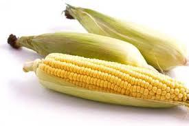klobot jagung merugikan untuk jagung liar