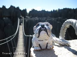 photo essay africa through the eyes of a miniature bulldog grand