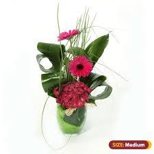 Aspidistra <b>Twist</b> • Elegance Florists Cork