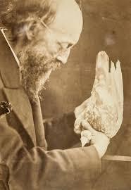 natural selection darwin correspondence project william bernhard tegetmeier