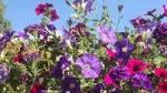 Gardeners wanted to help dementia patients