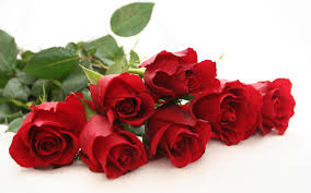 Image result for picture red rose