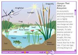 pond ecosystem diagram for kids   printable wiring diagram        ecosystem ex les for kids on pond ecosystem diagram for kids