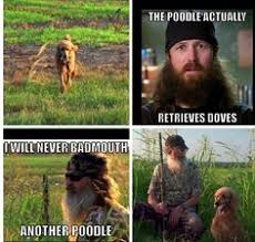 Standard Poodles, etc. on Pinterest | Standard Poodles, Poodles ... via Relatably.com