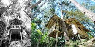 eden nature park davao descriptive essay   homework for you  eden nature park davao descriptive essay   image