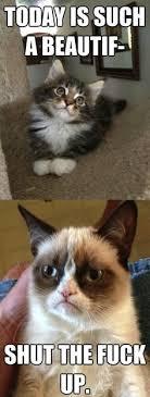 Grumpy Cat on Pinterest | Angry Cat, Grumpy Kitty and Grumpy Cat Meme via Relatably.com