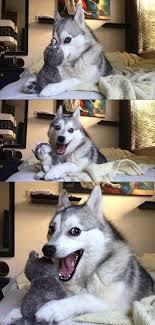 Memes Vault Husky Pun Memes Generator via Relatably.com