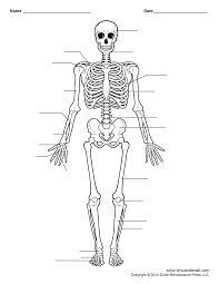 college anatomy bones quiz body anatomy skeletal anatomy quiz and reference on the app