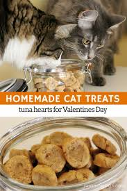 tuna flavoured cat treats are easy to make with just a few simple ingredients the cat lovers 27 diy solutions