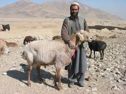 Image result for Afghan goats
