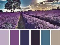 VIOLET: лучшие изображения (839) в 2019 г. | Colours, Color ...