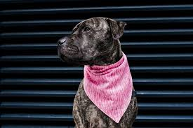 Pink Triangle Roll Down <b>Dog Bandana</b>