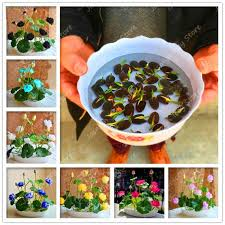 10pcs lot plants fruit protection bag garden anti bird drawstring net agriculture pest tree mosquitoes prevent tool