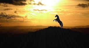 Resultado de imagen para caballo nube
