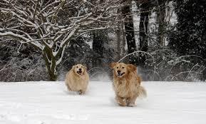 Ειδική   φροντίδα  το χειμώνα χρειάζονται τα κατοικίδια.....