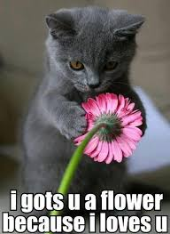 Funny Memes - Cute Kitten Loves You With Flower | Super Cute ... via Relatably.com