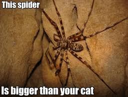 Giant Huntsman Spider   Wat   Know Your Meme via Relatably.com