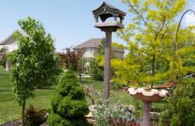 Backyard <b>Birds</b>: How to Attract Them with the Right <b>Flowers</b>, Shrubs ...