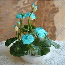 Hot Sale <b>10Pcs</b>/<b>Pack Bowl lotus</b> Bonsai <b>Hydroponic</b> Plants Aquatic ...