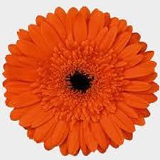 <b>Gerbera</b> Daisy <b>Orange</b> - Wholesale - Blooms By The Box