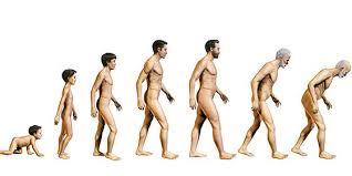 Resultado de imagen de edades del hombre