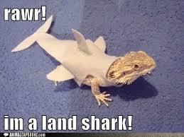 Lizard Land Shark