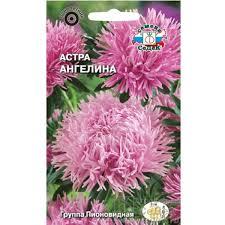 <b>Астра Ангелина</b> (пионовидная розовая) (Евро, 0,1) (СеДеК) (10 ...