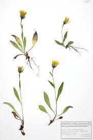 Bericht über 25 für die Flora des Lungaus