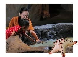 <b>Feeding Time</b> – AquariaKLCC – Malaysia state-of-the-art aquarium