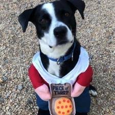 Dogs for Adoption « Homeward Trails <b>Animal</b> Rescue | <b>Pet</b> Adoption ...