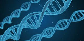 Лекция «Что может сказать о нас генетика?» / Афиша ...