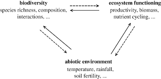 linking biodiversity and ecosystems towards a unifying ecological figure