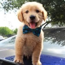 <b>Hipidog</b> Luxury Braided Leather Dog Leash and Collar Price: 31.62 ...