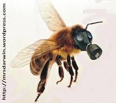 Resultado de imagem para charge - abelhas