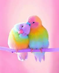 Животный мир | Милые детеныши животных, <b>Разноцветные</b> ...