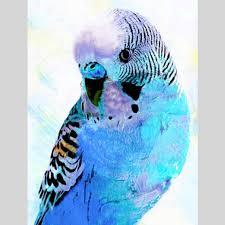 "Full Round Drill 5D DIY Diamond Painting ""Animal Bird"" Embroidery ..."