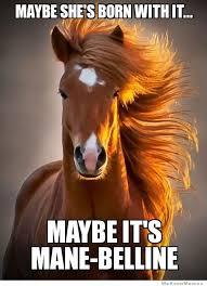 Ridiculously Photogenic Horse – Meme | WeKnowMemes via Relatably.com