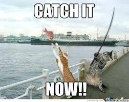 Hungry Cat by iman_hafizuddin - Meme Center via Relatably.com