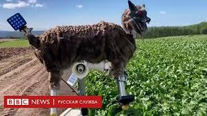 Как в Японии борются с медведями - BBC News Русская служба
