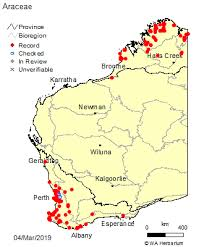 Araceae Juss.: FloraBase: Flora of Western Australia