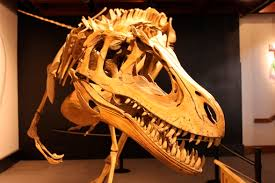 Image result for dino bones