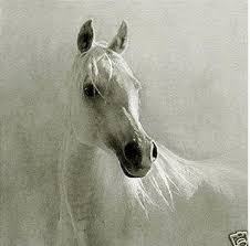Framed Beautiful White Horse,<b>Pure Handpainted</b> Modern Abstract ...