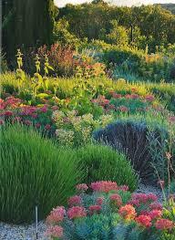 Small Picture Best 25 Mediterranean plants ideas on Pinterest Mediterranean